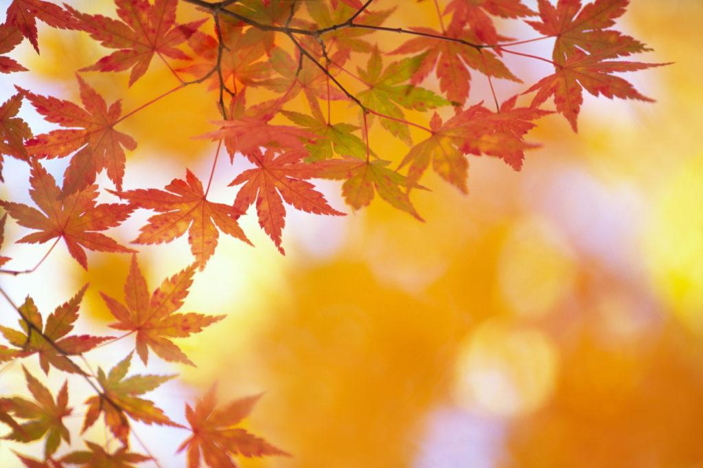 Nori Noda Ikebana autumn